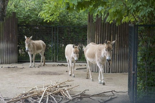 Onager