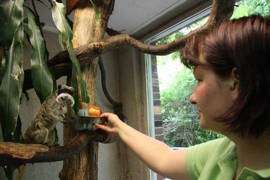 Praktikum im Zoo