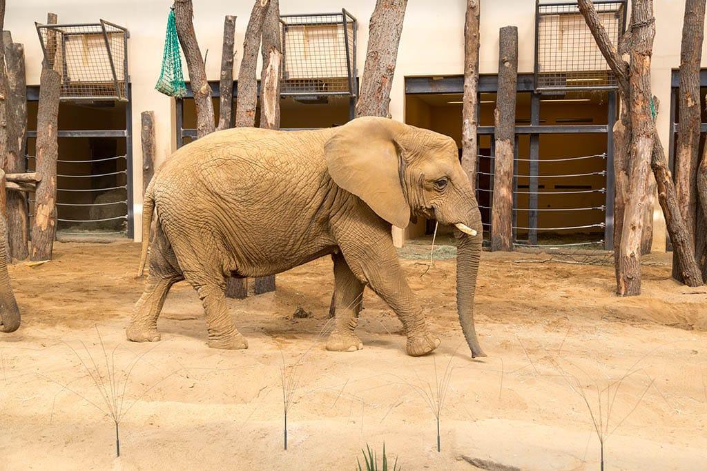 Elefantenanlage 8
