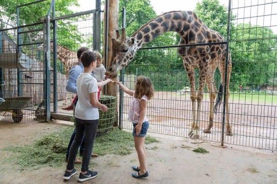 Giraffenhaus 4