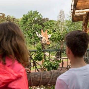 Giraffenhaus 5
