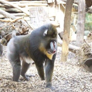 Mandrillhaus 4 Zoo Magdeburg