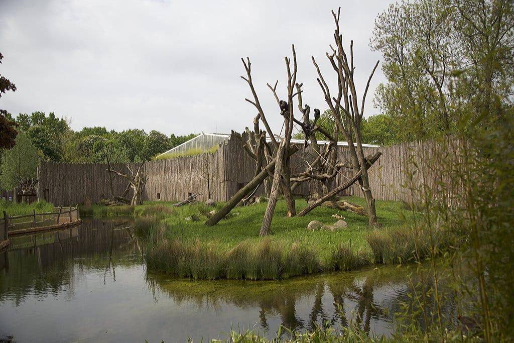 Schimpansenhaus 5 Zoo Magdeburg