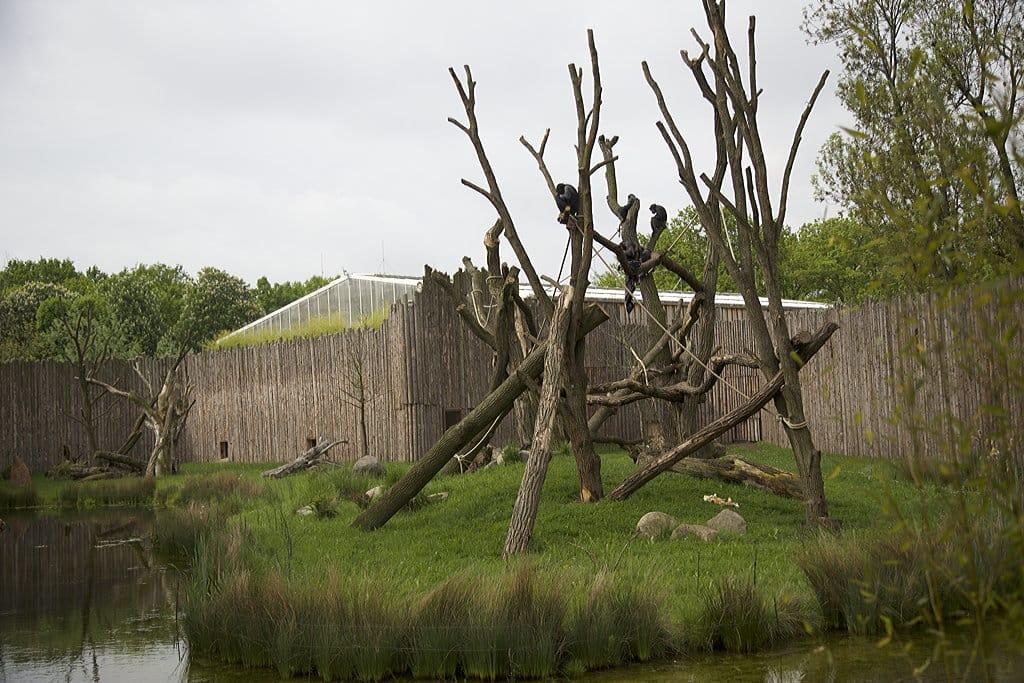 Schimpansenhaus 6 Zoo Magdeburg