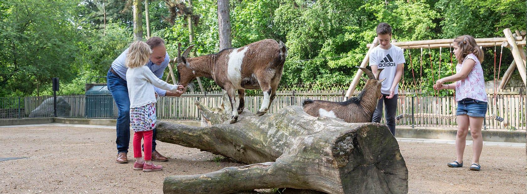 begehbare Tieranlage