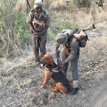 Mit Hund gegen Wilderer
