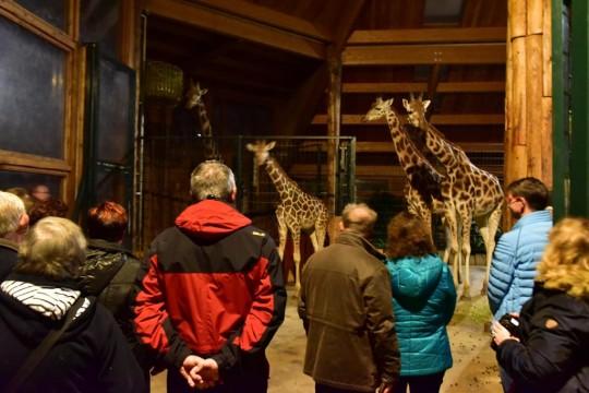 Afrika Abend im Zoo
