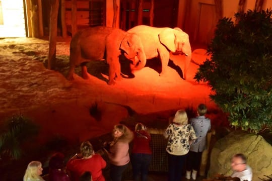 Africambo Abend bei den Elefanten