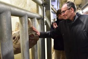 Besuch beim Nashorn