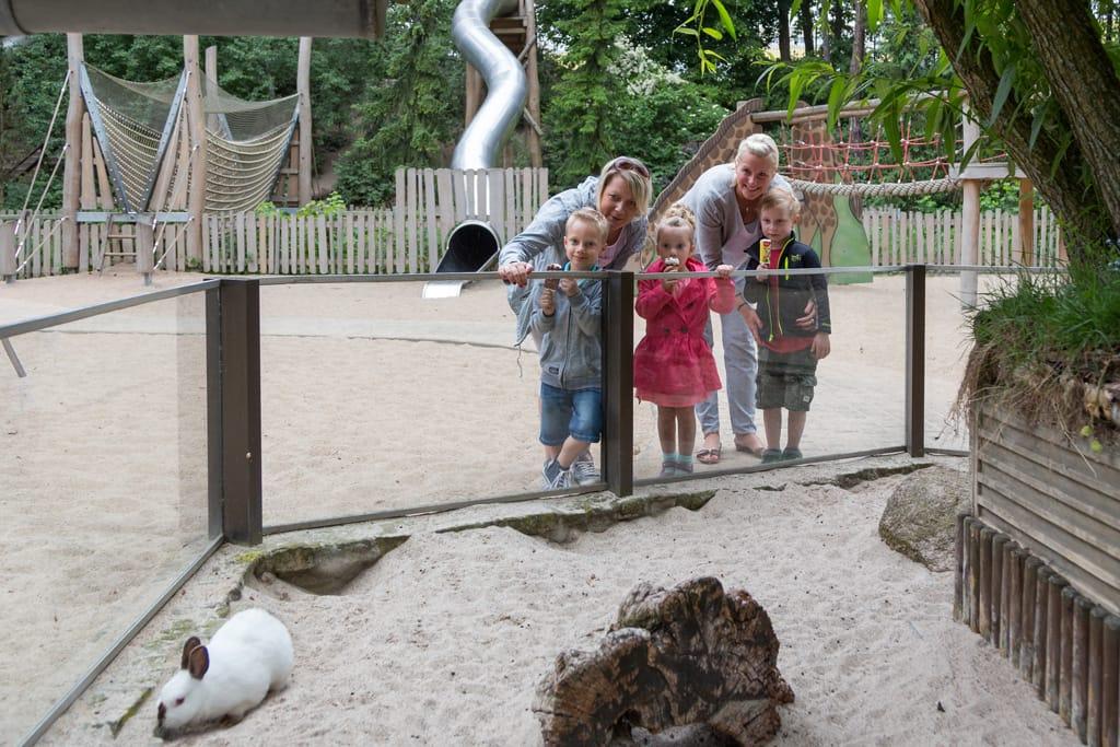 Kaninchen mit Besucher