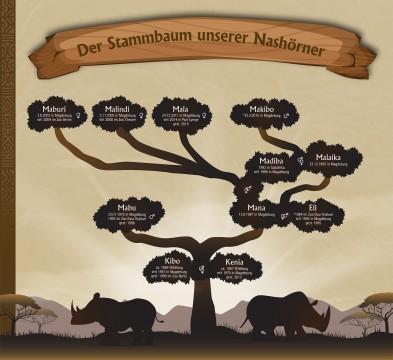 Nashorn Stammbaum