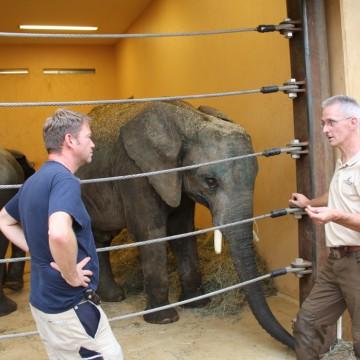 Elefantenbullen Moyo und Uli angekommen