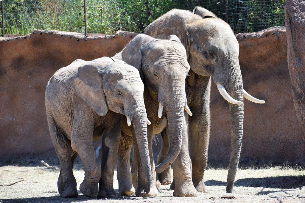 Das Elefantentrio: Moyo, Uli & Kando: Ines Sporleder