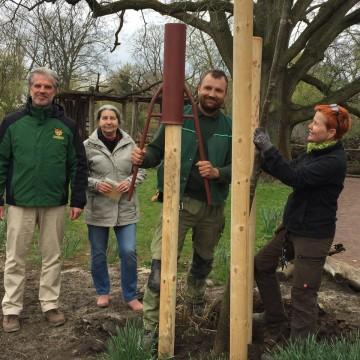 Zoomitarbeiter geehrt mit Baumpflanzungen