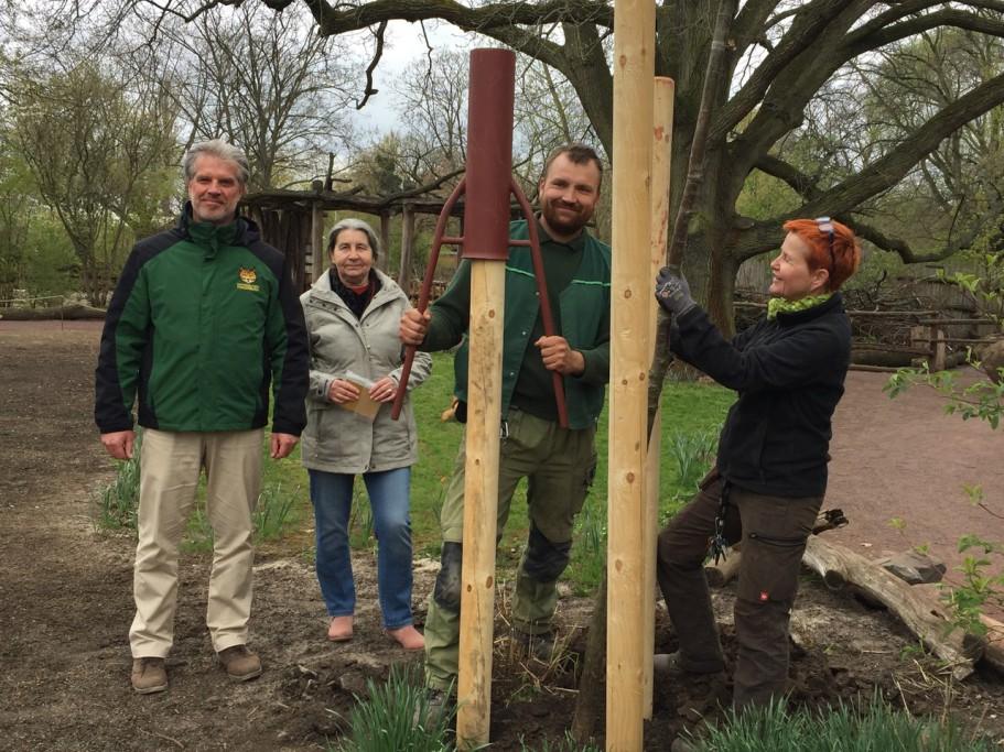 Baumpflanzung für langjährige Zoomitarbeiter, vlnr: Dr. Kai Perret, Marion Toth, Daniel Lübke, Susi Triebe