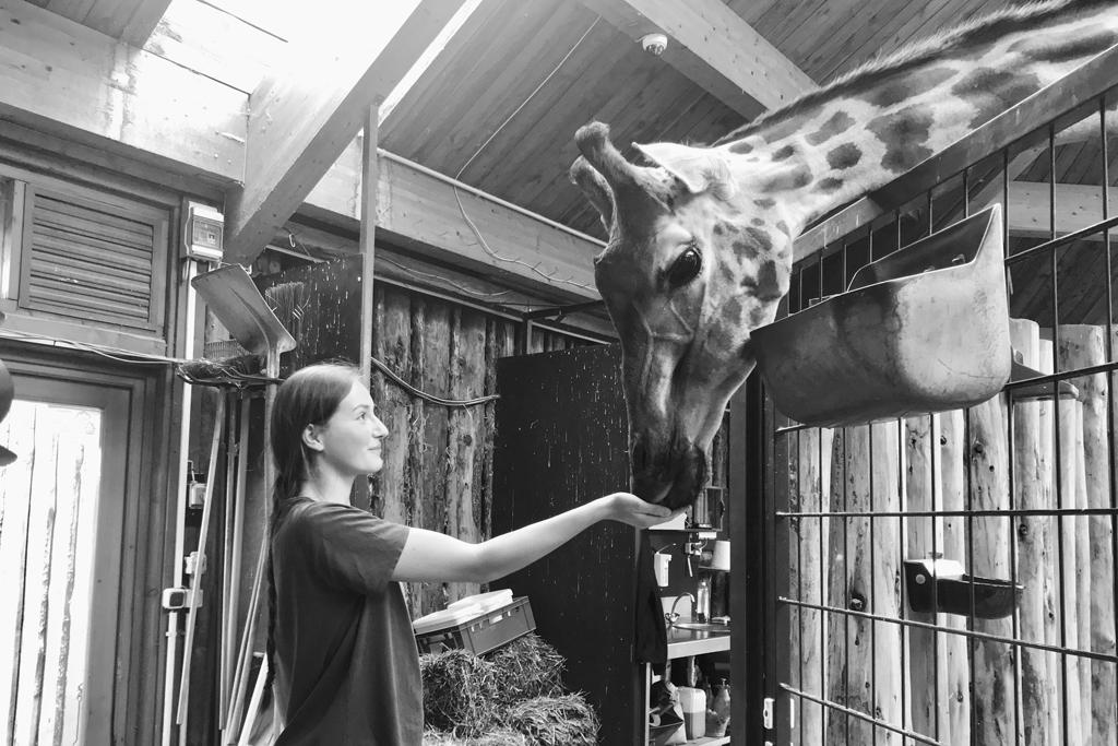 Giraffe Femke mit Anna-Lena Bachner_Zoo Magdeburg