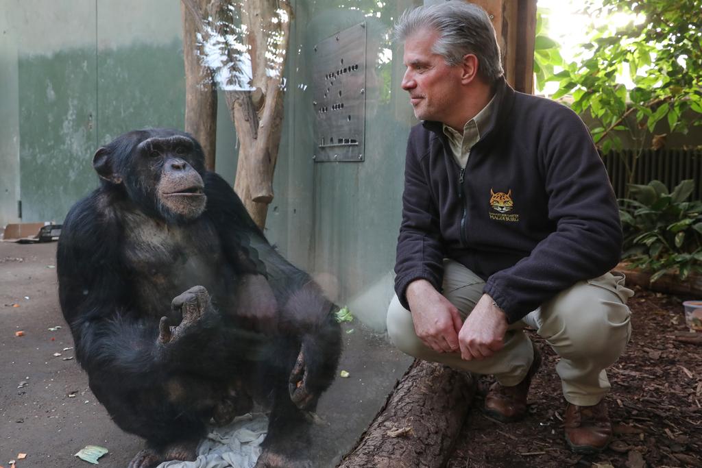 Schimpansen im Zoo, Dr. Kai Perret und Kofi