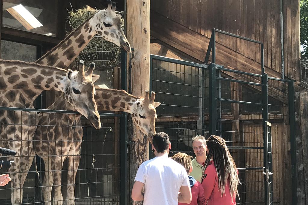 Tierpfleger Thomas Rolle im Gespräch mit Besucher bei den Giraffen / Zoo Magdeburg