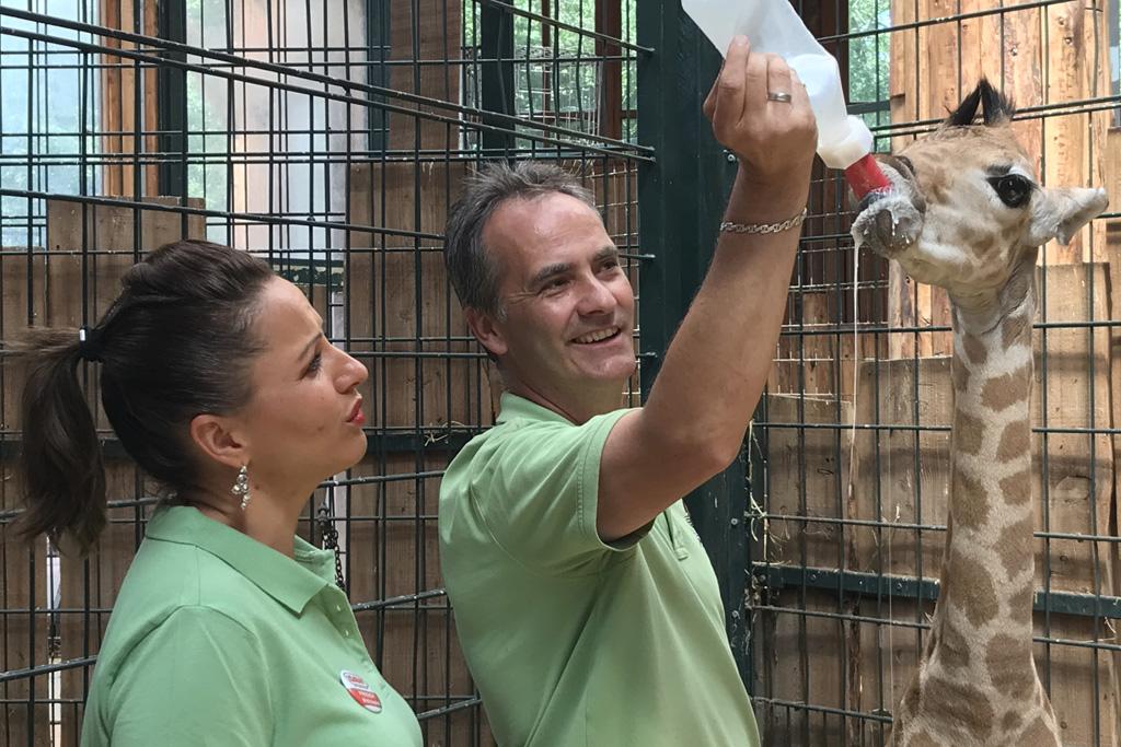 Freddy Holzapfel (Radio SAW) informiert sich über Vorbereitungen Zoonacht