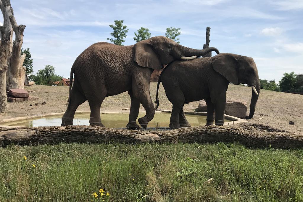 Weltelefantentag am 12.8.2019 im Zoo