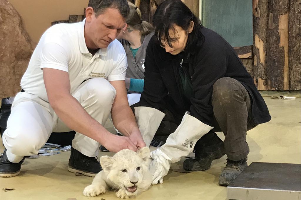 Weißer Löwe erhält erste Impfung, vlnr: Dr. Niels Mensing, Bereichsleiterin Susann Paelecke