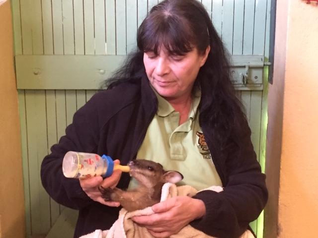 Frau Ellen Driechciarz und das Flinke Känguru 'Ötzi'