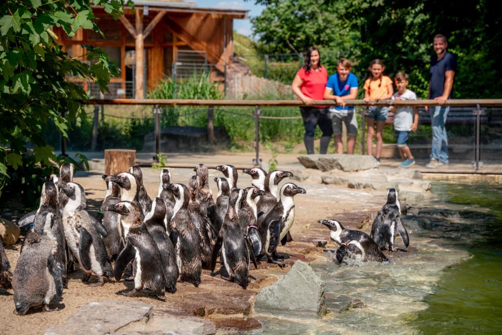 Zu Besuch bei den Brillenpinguinen © www.AndreasLander.de